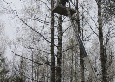 mtalkkari ongelmapuun kaato nostimella
