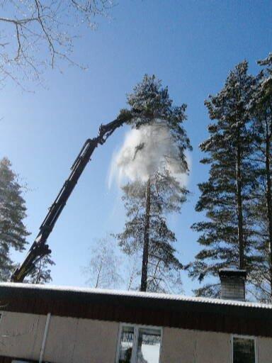 mtalkkari puiden kaataminen