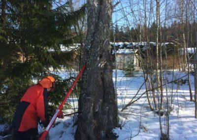 mtalkkari talvi ongelmapuu